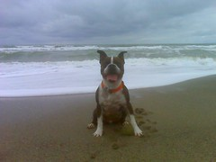 Cooper @ Rockaway Beach, Pacifica | by Manny V