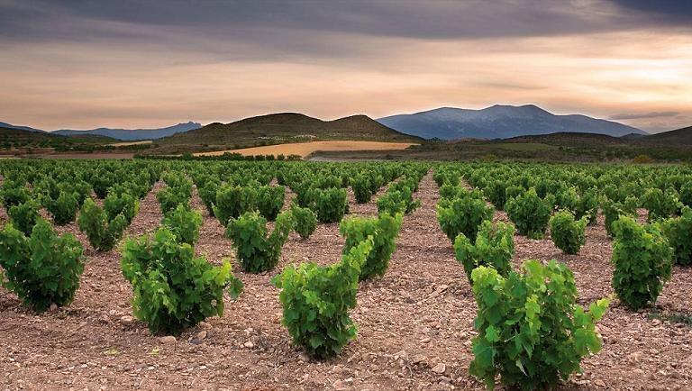 Viñas en el Campo de Borja (& the winner is?? / Flickr)
