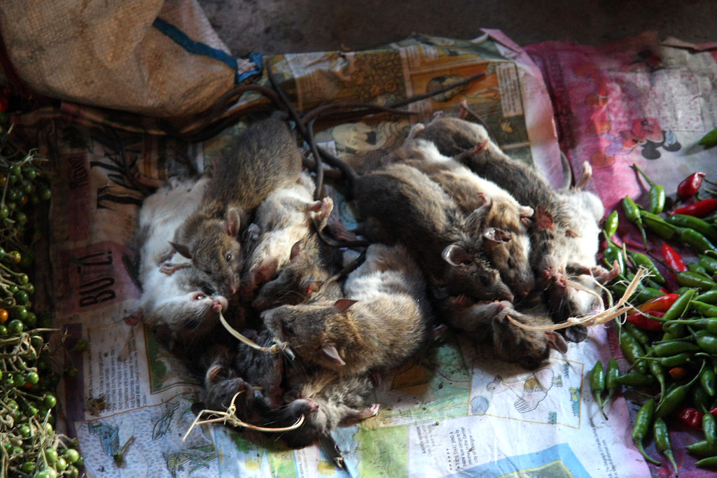 Rats traditional food on the local market in ziro arunac for Arunachal pradesh cuisine
