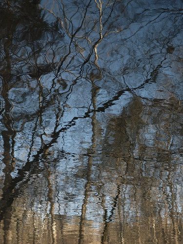 Waterscape, Tree Reflection, Slight Return | by Ame Inu (Done For A Bit, Back Soon)