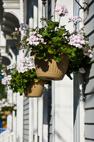 Flower Pots | by ulrichsson