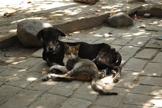 Mission Cat Dog