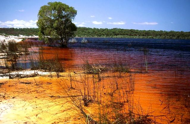 Tea Tree Lake Fraser Island