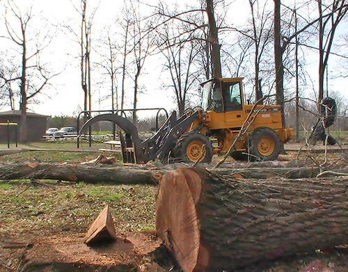 Timber Harvest at Salamonie Lake | by LouisvilleUSACE