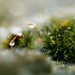 Moss and Dewdrops