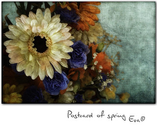 Postcard of spring | by in eva vae
