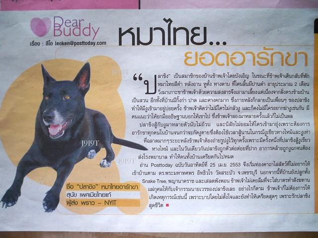 หมาไทยลงหนังสือพิมพ์