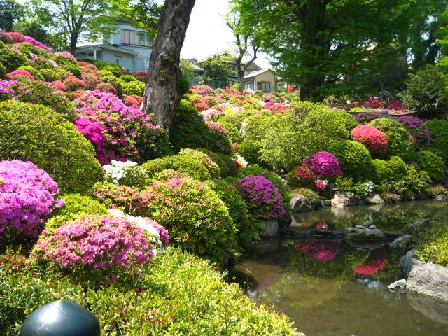 根津神社のつつじ祭りに行ってきました