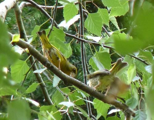 Breeding season dates for key breeding species in Species ...