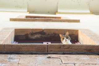 Coucou le chat. | by pixelia2