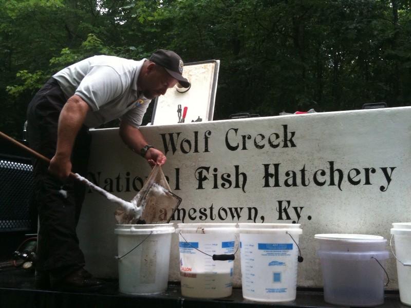 Stocking Trip To Rock Creek Wolf Creek Nfh Staff Member
