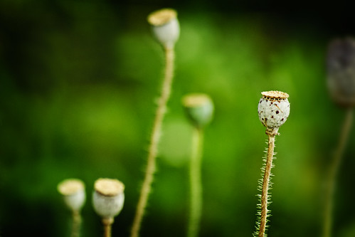 Prickly | by Tonya Doughty