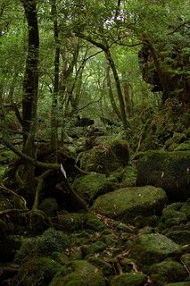 Yakushima greens | by Hard Rain ~ 激しい雨