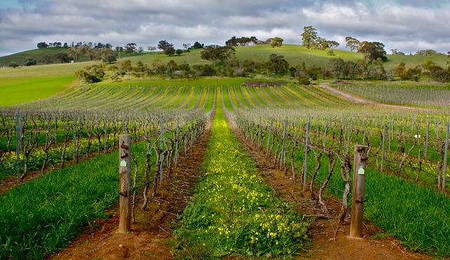 Adelaide Vineyards