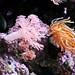 Coral Reef Room