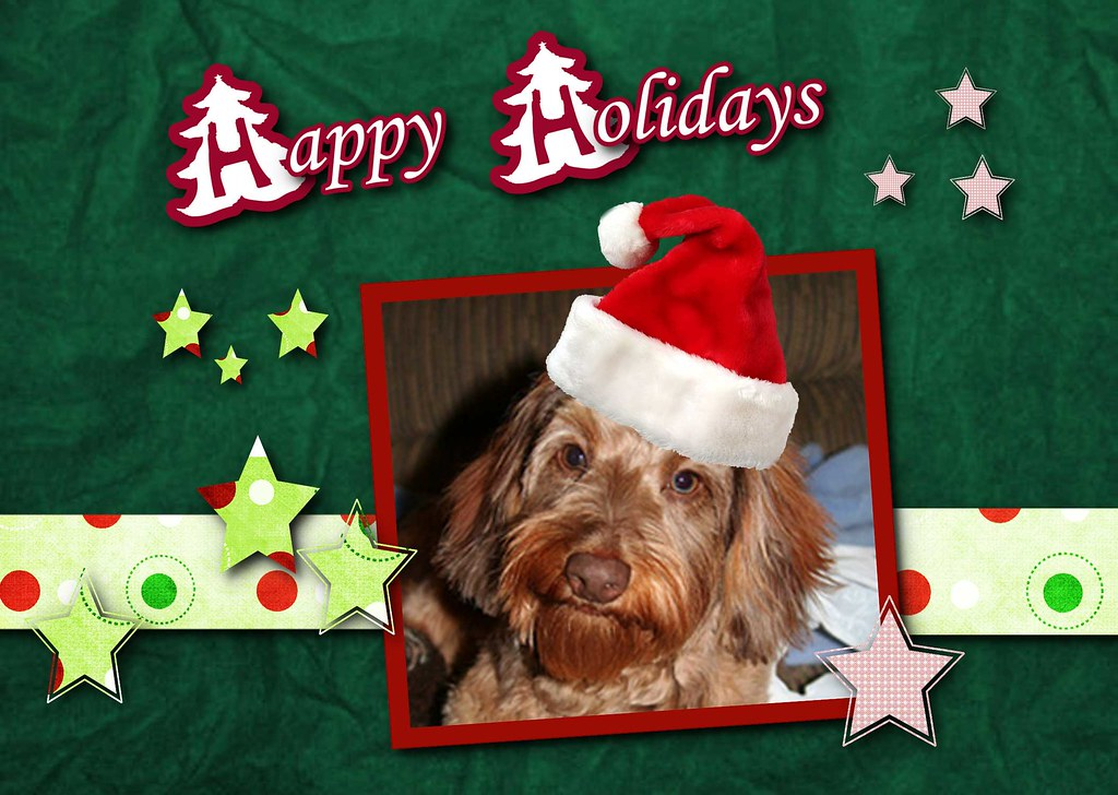 Happy Holidays Dog Pictures