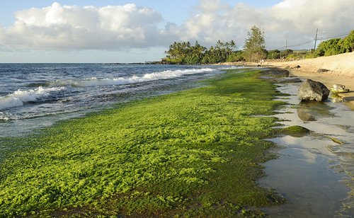 Green Algae on Beach | by jdnx
