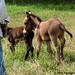 Joe and donkeys 8
