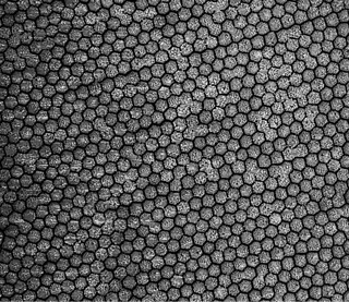 Micrograph of a Nanoparticle Crystal Lattice | by EMSL