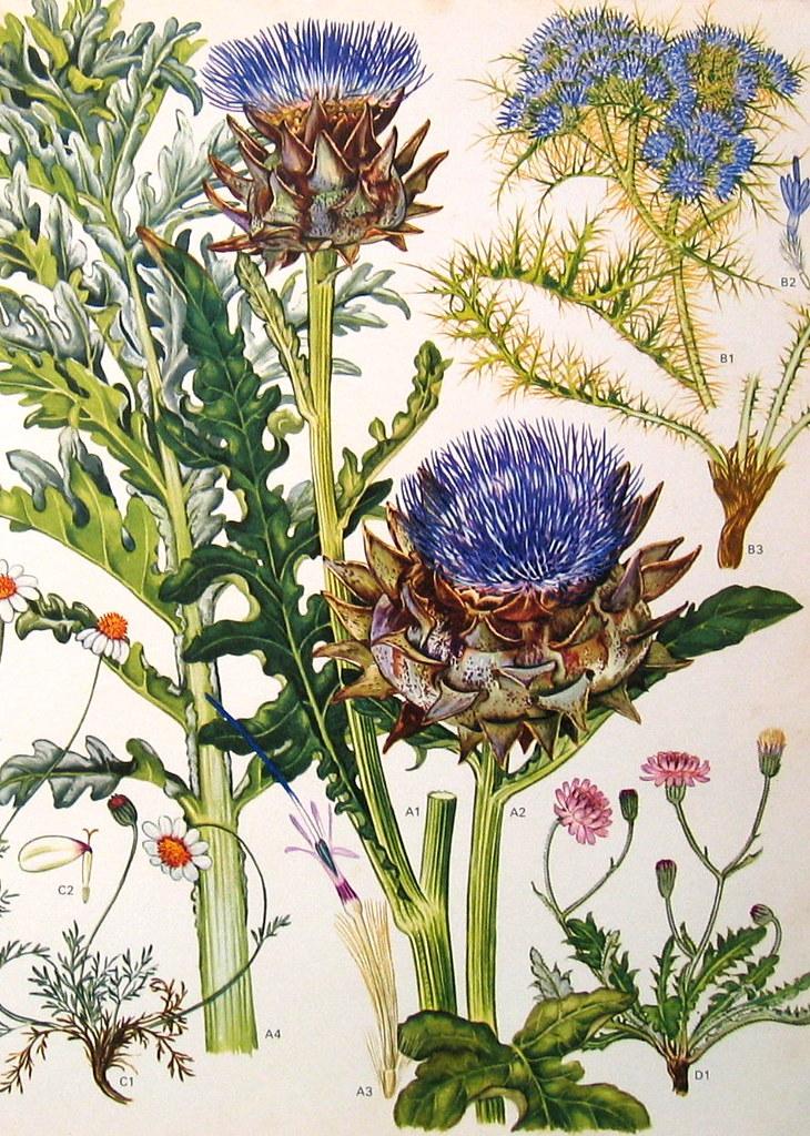 vintage botanical prints flowers by vintage botanical prints flowers by