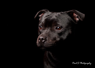 Pet Portraiture | by A - Person (busy)