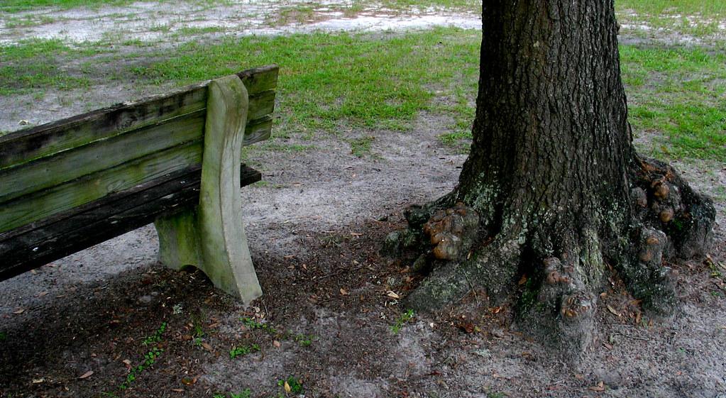 Park bench grass dirt tree trunk oak base christopher for Tree trunk garden bench