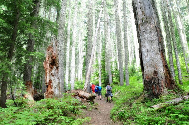 Iron Mountain Hike Trees @ Mt. Hope Chronicles