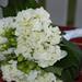 Home-made Bouquet