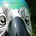 E029 - Blue Macaw by Jirawan Suwanakl(6)