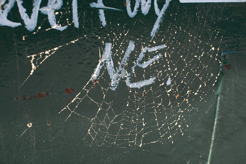 Glistening spiders web | by Andy Oakley