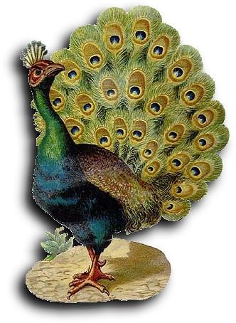 Victorian scrap: Peacock | Antique Photo Album | Flickr