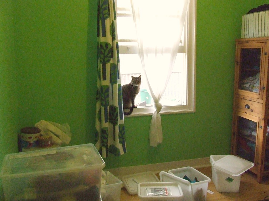 Avec cat | For later reference, paint is Dulux 'applegate ...