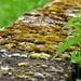 Stone fence Steinwenden