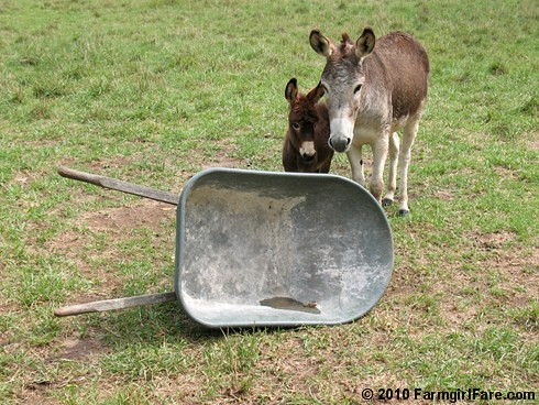 What to Do with an Empty Treat Barrow 1 | by Farmgirl Susan