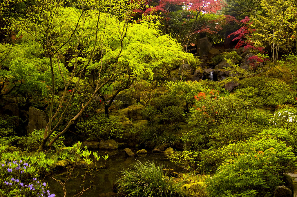 Portland japanese garden natural garden waterfall and cre for Plants found in japanese gardens