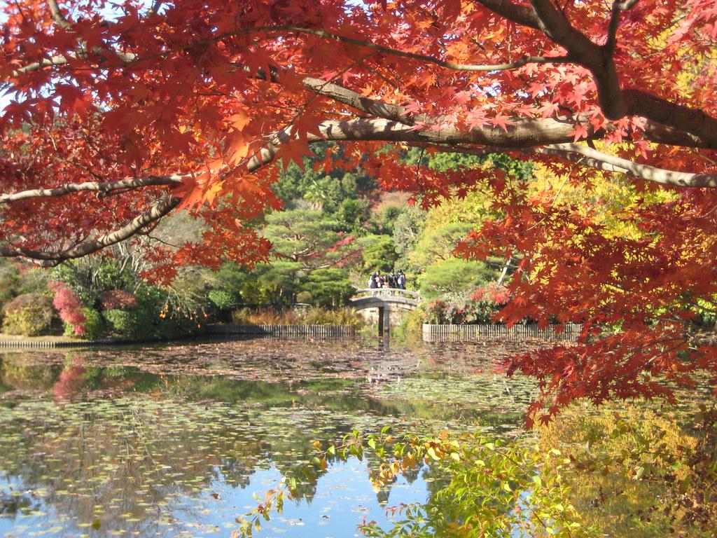 KYOTO UNIVERSITY Image