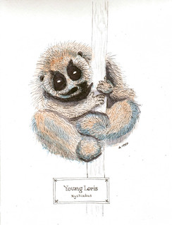 young slow loris (steph) | by gentlemanscientist