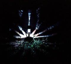 Lawn Light by Sylvester McMonkey McBean