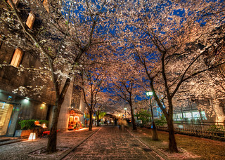 A Silent Evening in Kyoto Under the Cherry Blossoms | by Stuck in Customs
