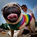 0B6Q3436 pride dog show 2010