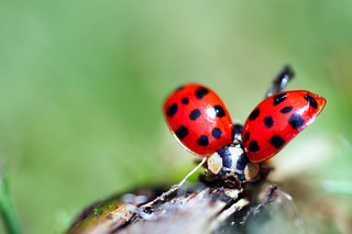 ladybird lift off, Bristol | by Disorganised Photographer - Ian Wade - Travel, Wil