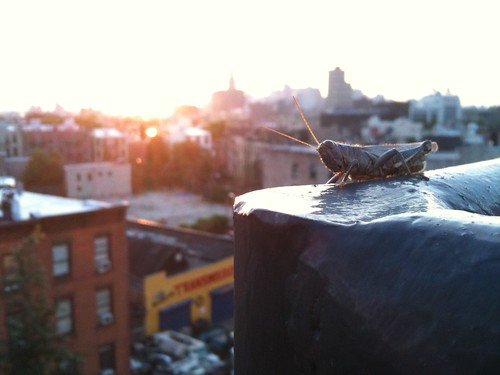Grasshopper in Brooklyn | by i'mjustsayin
