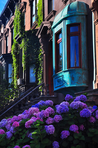 Brownstone Neighborhood | by Bill Gracey 17 Million Views