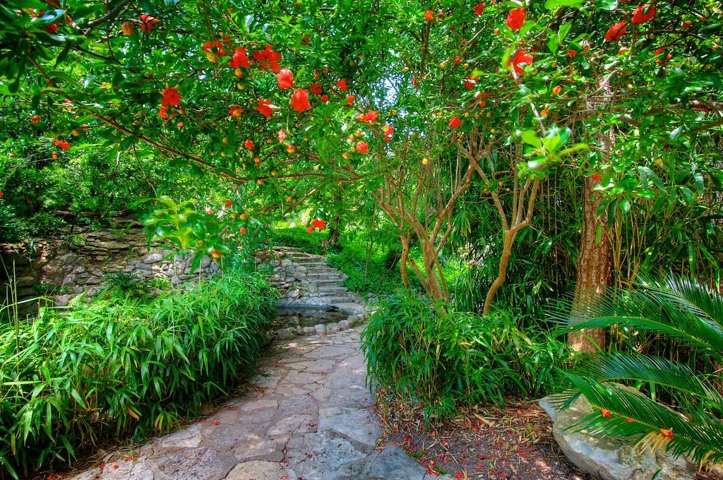 ... Red Flowering Tree, Japanese Gardens At Zilker Botanical Garden   By  Don J Schulte