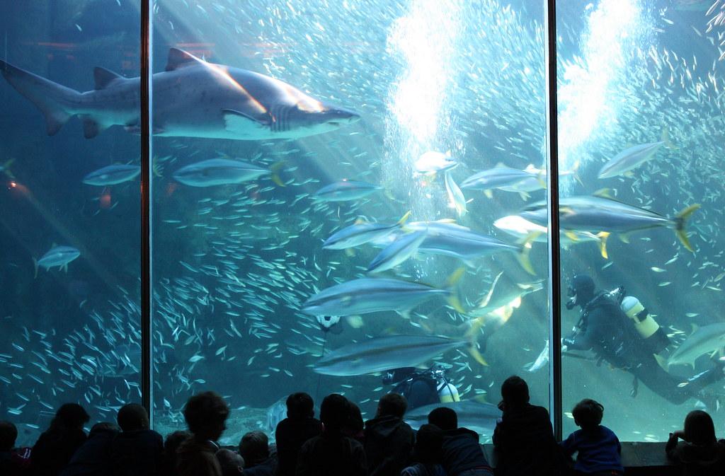 Risultati immagini per two oceans aquarium