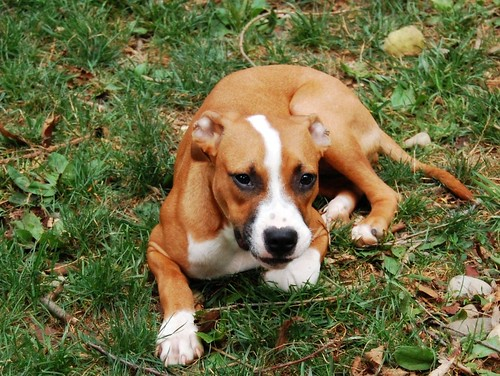 Rescue Dogs For Adoption Knoxville Tn