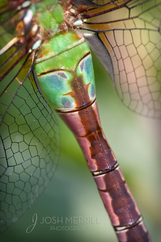 Darner Abstract | by Josh Merrill Photography