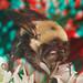 Bumblebee 6903