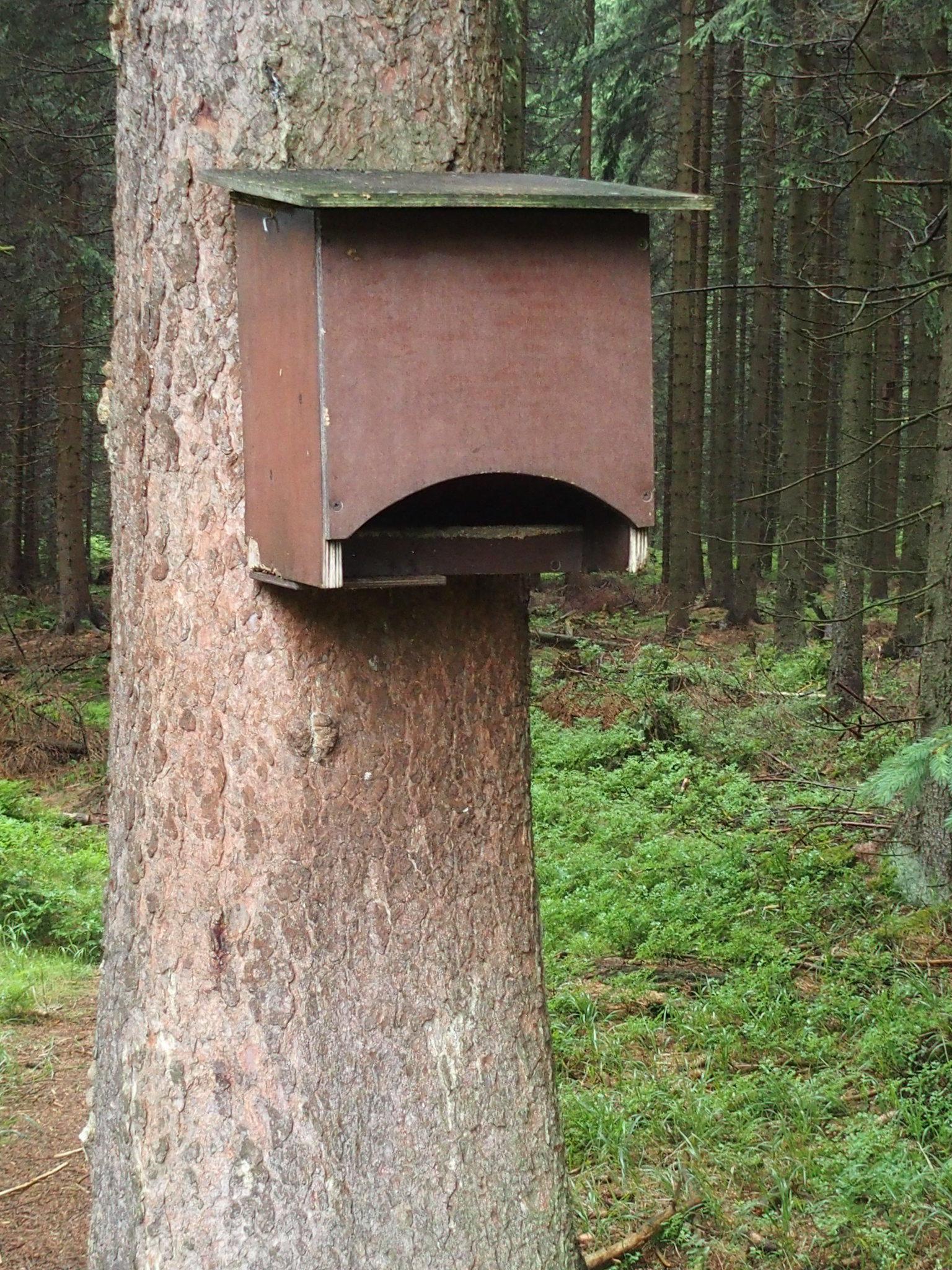 Brevlåda till skogens djur?