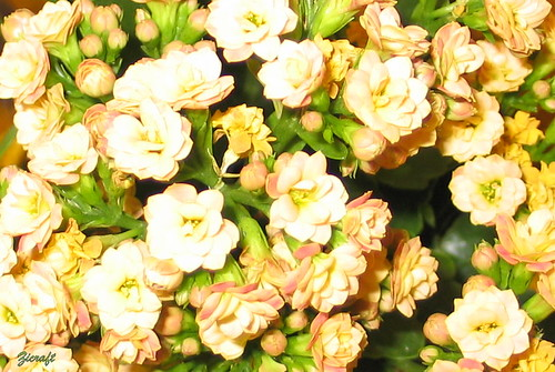 Uma Linda Noite Para Você: Uma Linda Quinta Flowers Para Voce!